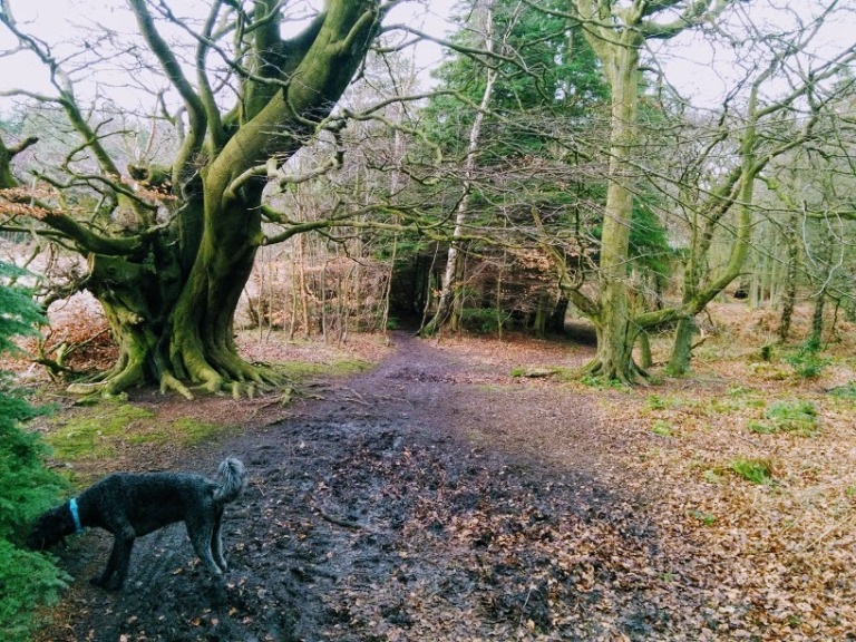 CrossfordCairneyhill8