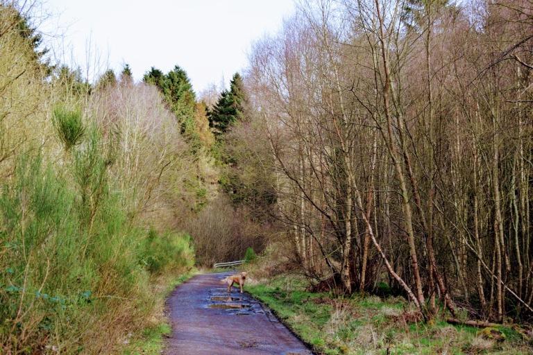 DunfermlineRailwayDean8