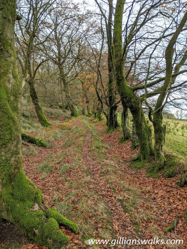 Lovely woodland footpath, can be muddy at times (photo taken on a later visit Nov 2020)